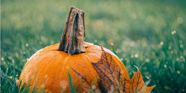 Halloween - Kürbis, Hexen, Werwölfe und Gespenstertreiben